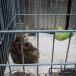 How I became a cat sitter Part 2 – Larmlarm: the first love of my life