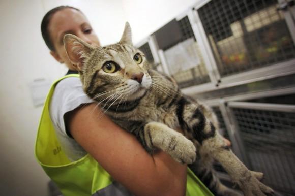 International Cat Travel Packing List