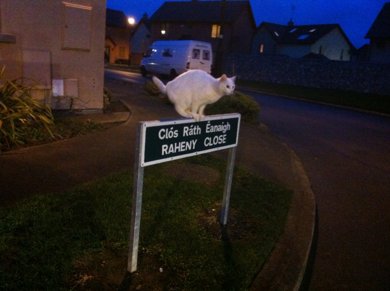 Cats in the (Dublin) City