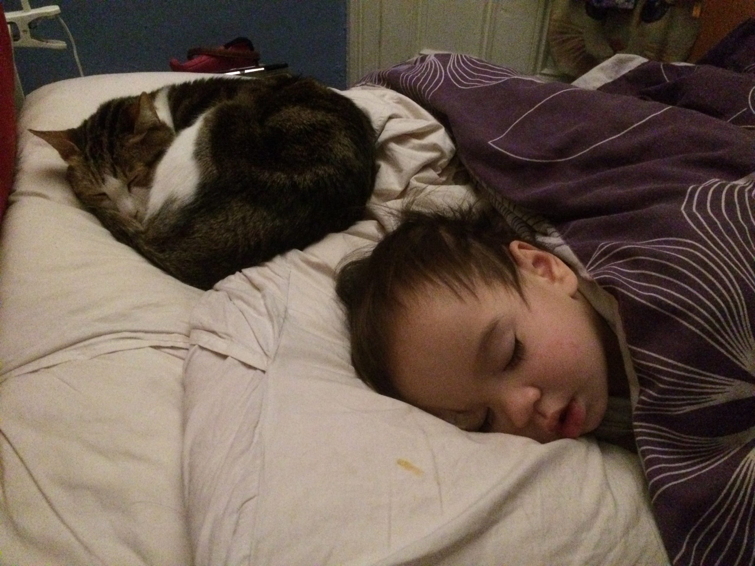 Bed sharing with cat(s)