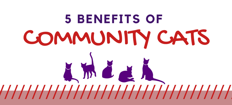 Why do we need community cats?