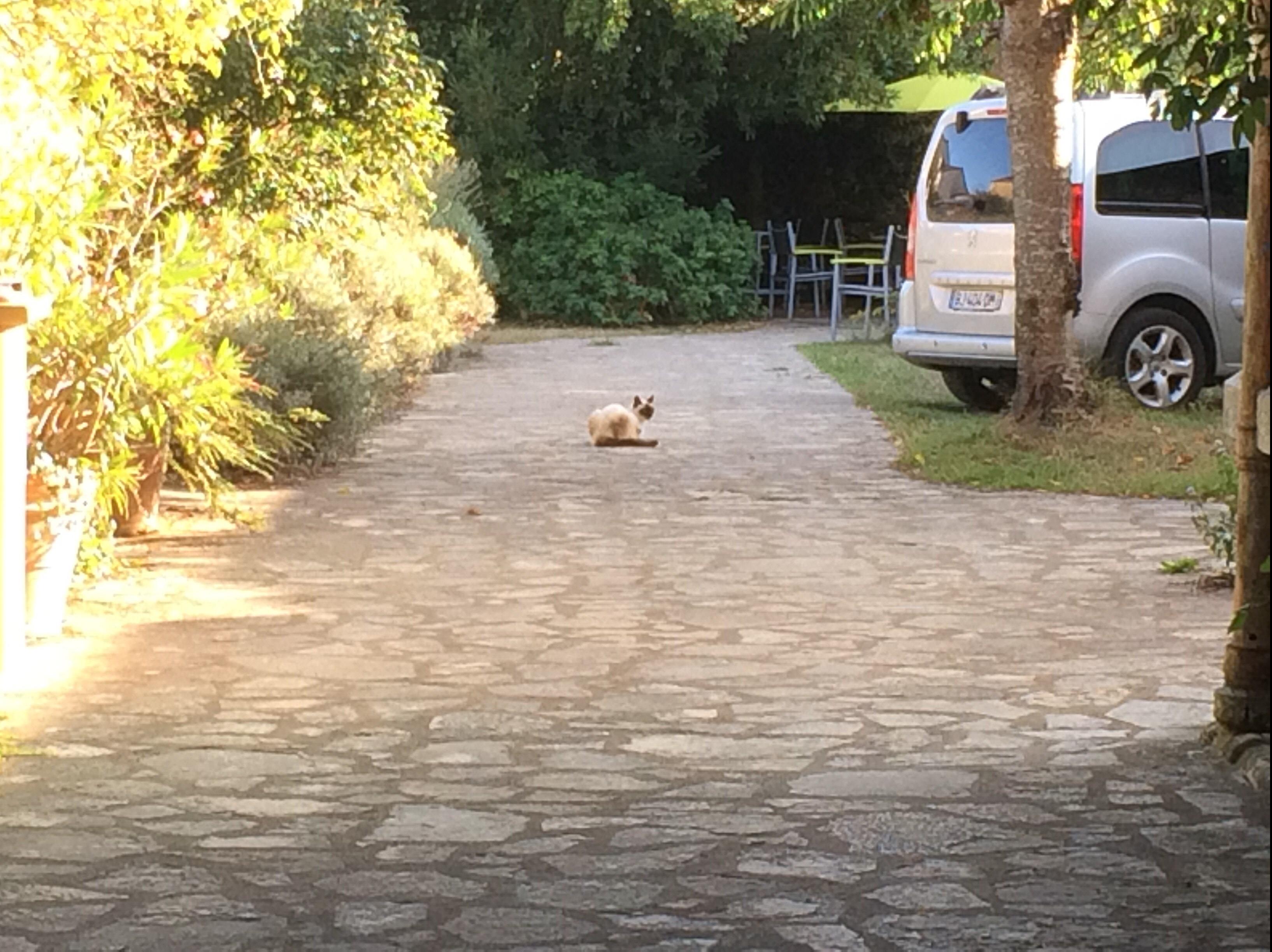 cat in lucon