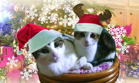 Catsmas Gift Guide