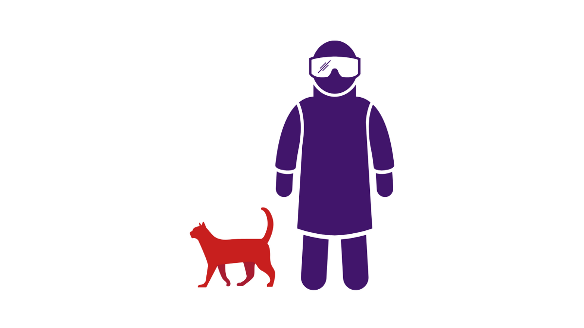 Cat tips during COVID-19 pandemic